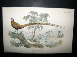 Allen 1890's Antique Bird Print. Reeves Pheasant